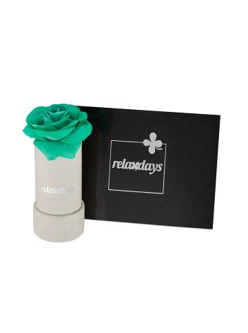 Relaxdays Rosenbox 1 türkise Rose in Grau