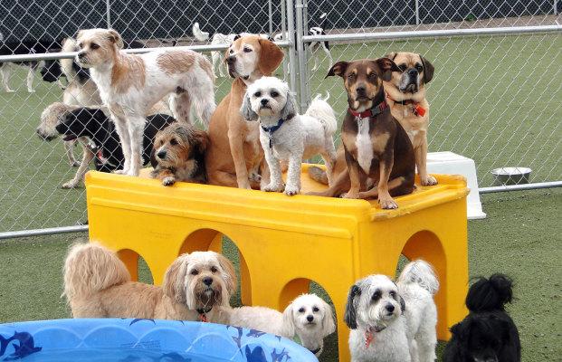Well Established Dog Daycare Including Real Estate