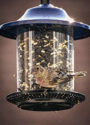 5-Day Specialty Bird Feed, Nature & Gift Store