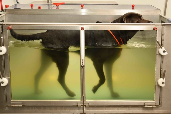 Veterinary-Operated Canine Rehab