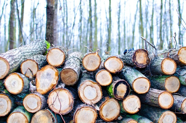 Well-established Tree Service Company