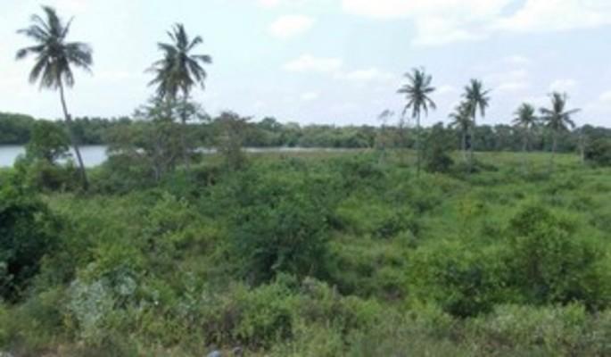 Keeniya Land for Sale