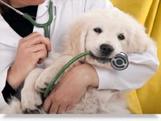 AAHA Designated Animal Hospital W/ Real Estate