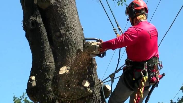 Established Tree-Trimming Business