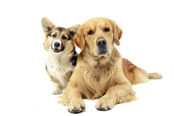 Top Brand Albuquerque Dog Care Business for Sale