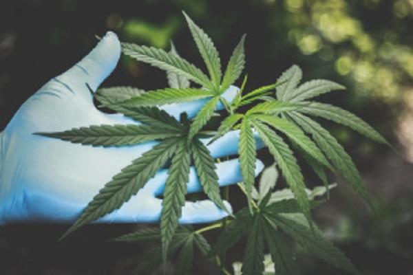 Toe In The Water Marijuana Investment
