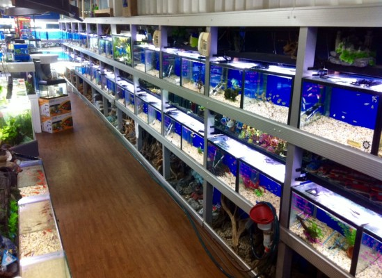 Aquarium Business For Sale In Northern Beaches