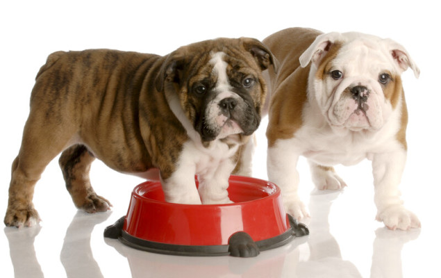 Pet Food Processing Business – Central Ontario