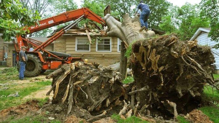 Profitable Tree Service and Power Washing Company