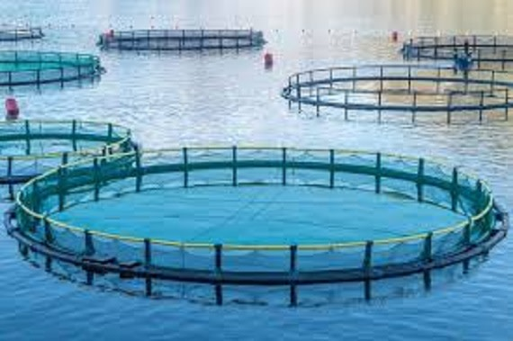 Establish Aquaculture Industry Zone