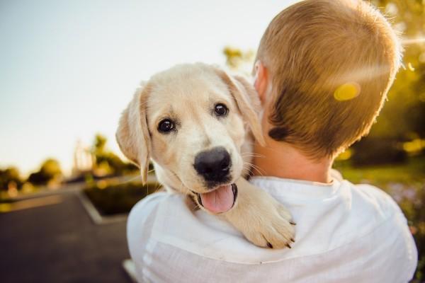 Furry Fun - Pet Product & Service Business