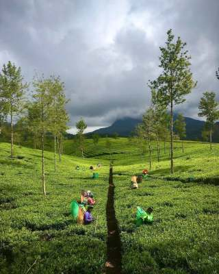 Wanted Investors Increase of the Tea Business