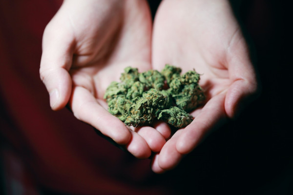 Cannabis Grow and Luxury Dispensary