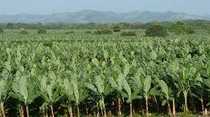 Agriculture Project Land for Sale