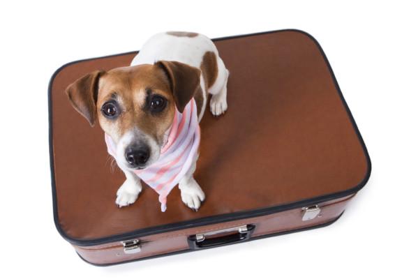 Boarding & Dog Daycare Business