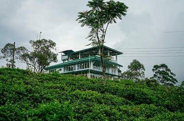Investment Land at Nuweraeliya Sri Lanka