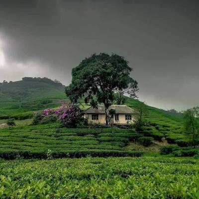 Seek Investor Invest of Funding Tea Estate