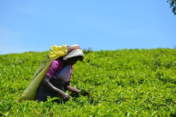 Tea Product Company Looking for Investor