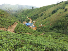 Sale of Tea Estate in  Sri Lanka
