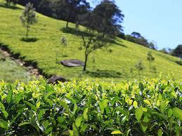 450 Acres Mix Plantation for Sale in Sri Lanka