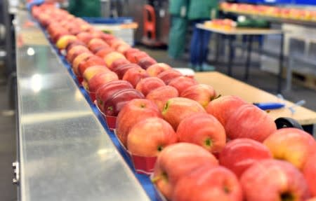 Wholesale Food Manufacturing/ Steadily Growing