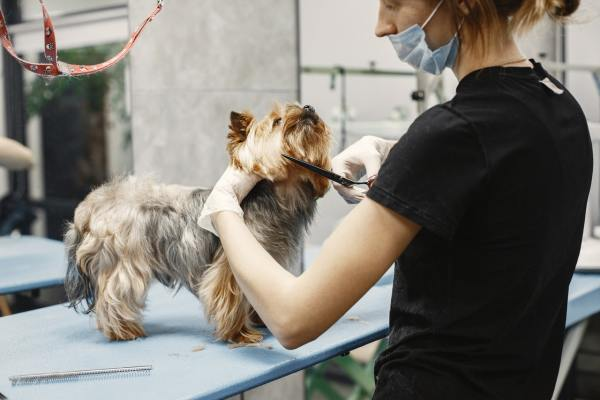Pet Supplies and Grooming
