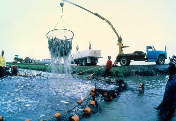 Seeking Investor: Extremely Profitable Aquaculture