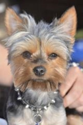 Dog Grooming in Suffolk County, NY