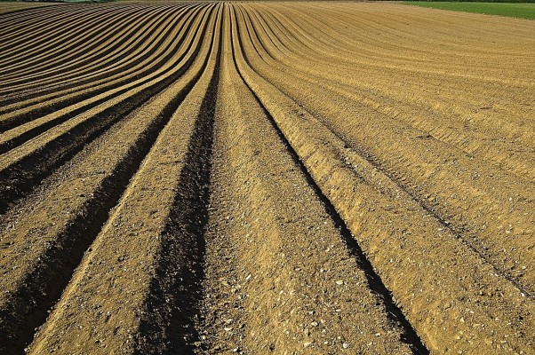 Special Fertilizers & Biostimulants