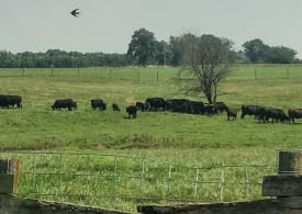 52 Acre Cattle Or Horse Farm