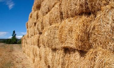 Wholesale Hay Distributor