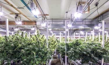 High-Tech, Automated Marijuana Grow Operation