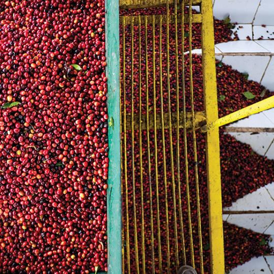 Bag of whole bean Panama Finca Santa Teresa Zorro Gesha coffee, roasted by Blue Bottle Coffee