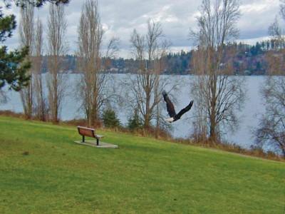 Eagle_Release_640x480.jpg