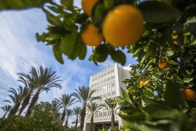 CSUF-oranges.jpg