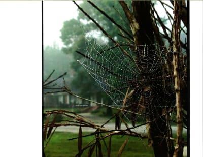 Barbara-Stainback-Nature's-Lace--2017-w1650.jpg