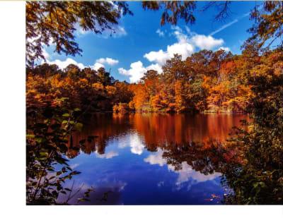 2018_Little-Cypress-Pond---Ken-Frischkorn.jpg