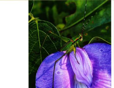 2018_The-Passionate-Grasshopper----Rickie-Smith.jpg