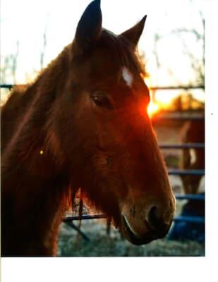 2018_Fort-Polk-Pony----Analiese-Gaffey.jpg
