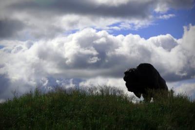 Buffalo_9645.siw-rotated.jpg