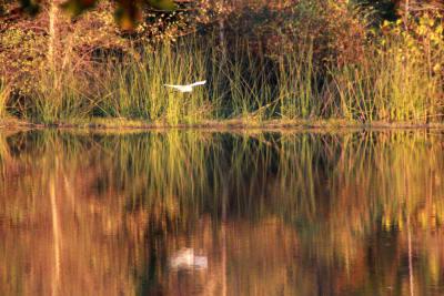 IMG_0160-fall-with-bird.jpg
