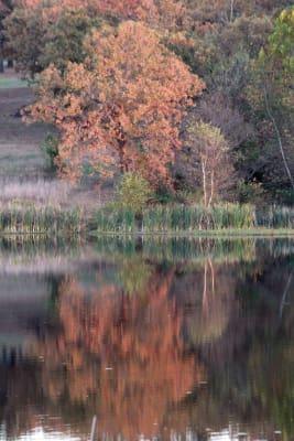 IMG_0179-prettywater-fall.jpg