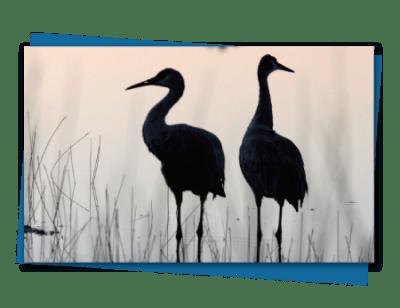 herons.png