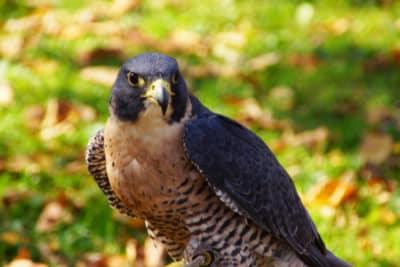 falcon-1024x683-960x300.jpg