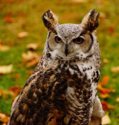 owl-976x1024-640x480.jpg