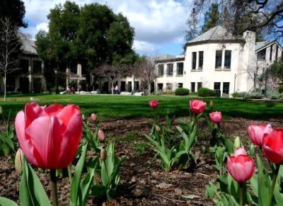 tulips_at_pioneer_park.jpg