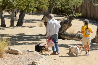 Blessing-of-the-Pets-010.jpg