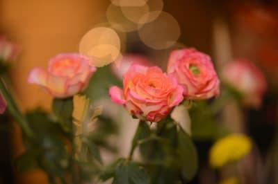 Fleur-du-Soleil-001.jpg