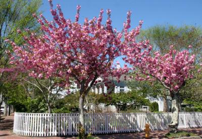 Atheneum-Garden-Spring-w640.jpg