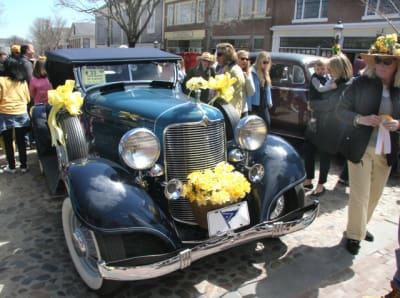 Daffodil-Parade-X2-w640.jpg